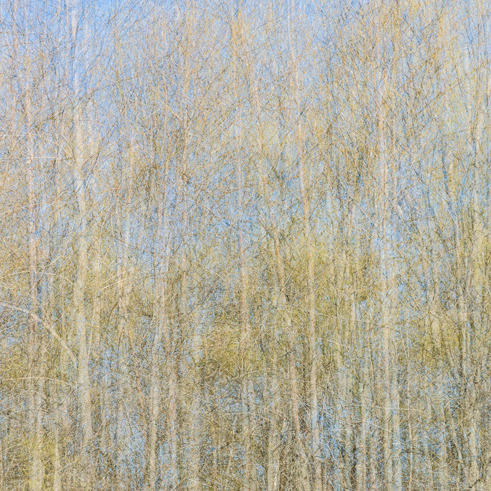 Seasons Inspired by Jackson Pollock